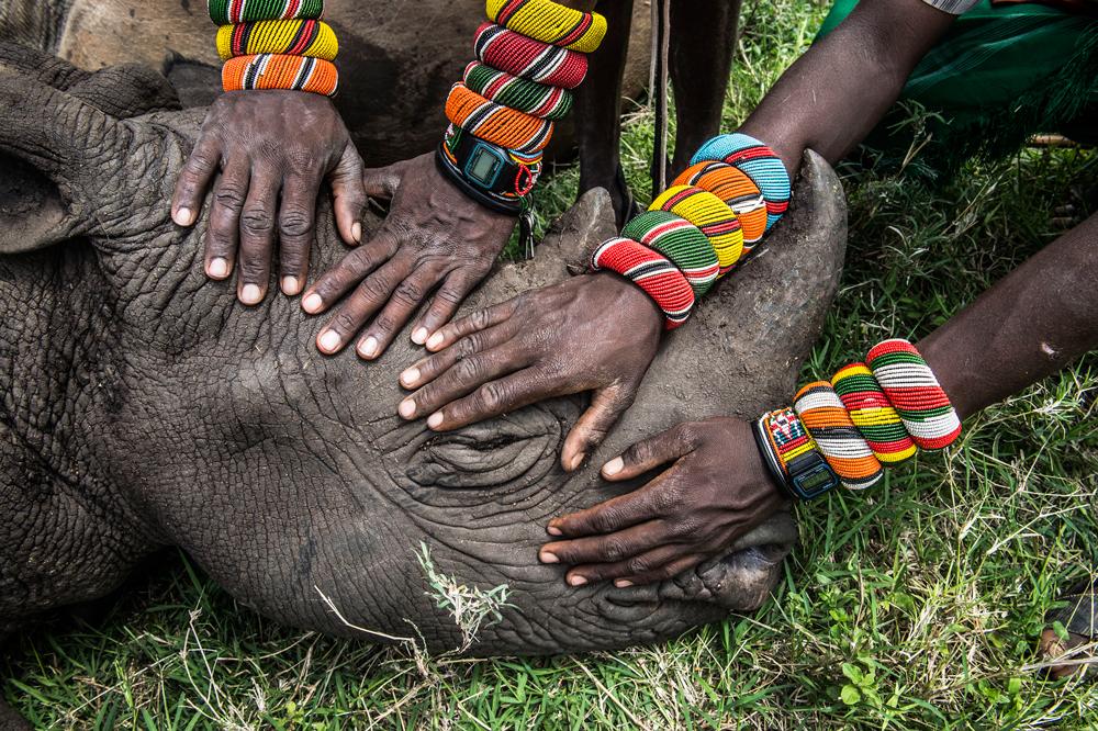 Lewa downs, Kenya del nord. Secondo premio natura singole. Un gruppo di guerrieri Samburu incontrano un rinoceronte per la prima volta. (Ami Vitale, National Geographic)