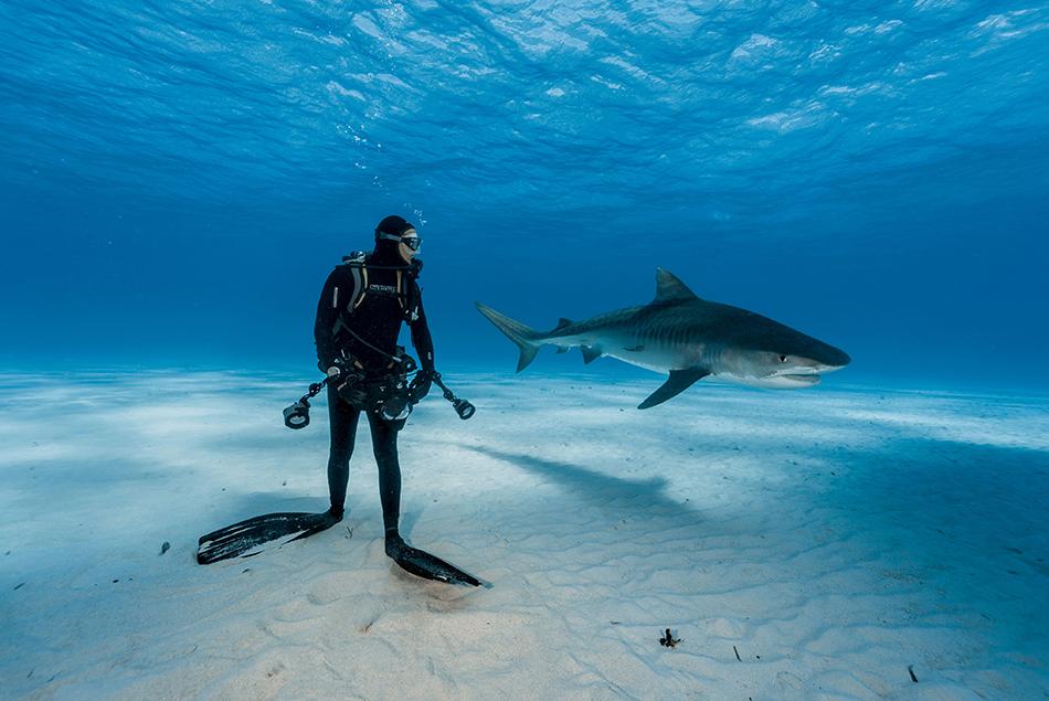 """Nuotando con uno Squalo Tigre, dal servizio """"Il MIo Amico Squalo Tigre"""""""